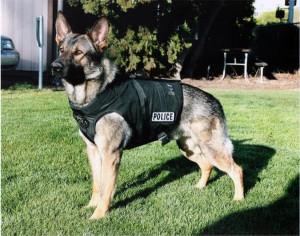 german shepherd police dog names » Free Pictures Online