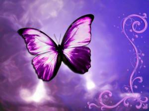 yorkshire_rose Beautiful Butterflies