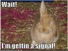 Rabbit sayings and quotes