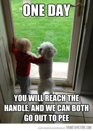Funny photos funny dog baby friends playing