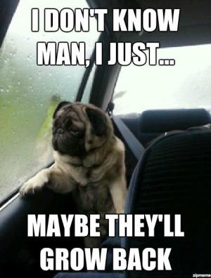 Introspective Pug Memes!