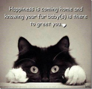 love fur babies! Although my fur babies are dogs :)