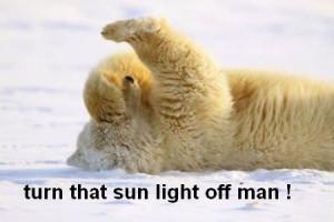 funny-polar-bear-picture-06.jpg
