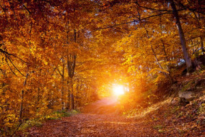 Fall Equinox Quotes: 30 Sayings To Celebrate Start Of Autumn