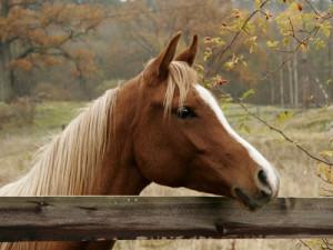 Cute Horse Pictures Images Wallpapers Photos 2013