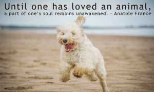 Love Your Dog Quotes
