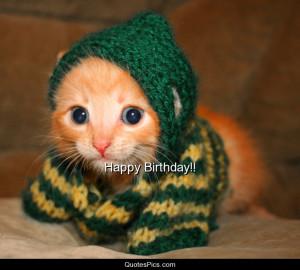 cat celebration happy birthday kitten post navigation