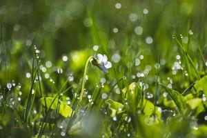 Fresh Spring Morning Dew Photograph