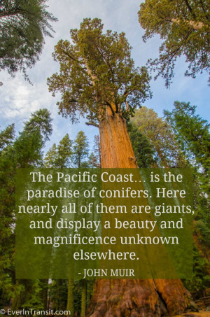 The Pacific Coast: Paradise of Big Trees | John Muir Quotes