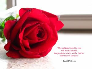 ... true love roses nice red roses best love roses red roses wallpapers