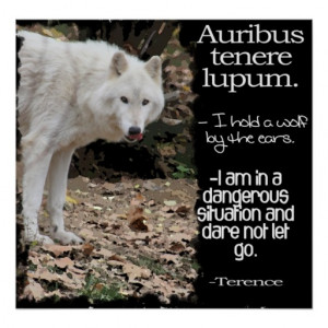 WOLF LATIN QUOTE TERRENCE POSTERS