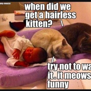 Funny dogs and cats talking,Funny dogs and cats talking images,Funny ...