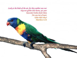 Bible Verses Creation Genesis