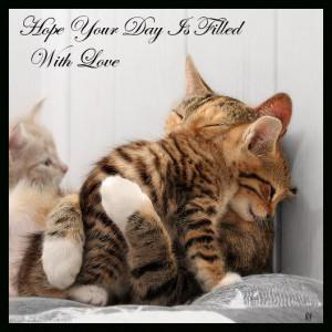 animals_cats_cute_hug_kitten_love-a.jpg