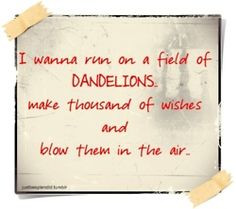 Dandelions & Other Wishes
