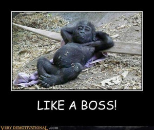 Vh Funny-Animals-Like-A-Boss-12