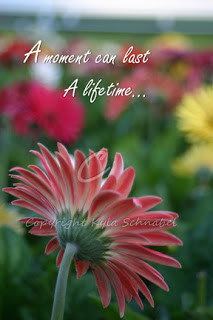... 6th october 2010 by imaginativeimagery labels daisies daisy digital