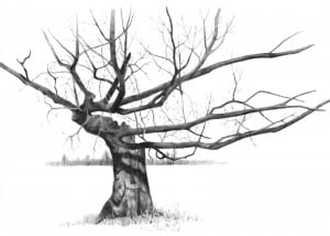 This beautiful tree stands proudly on the grounds of Saddleridge ...