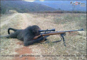 Funny Dog Sniper Picture Animals Cats Dogs Picture