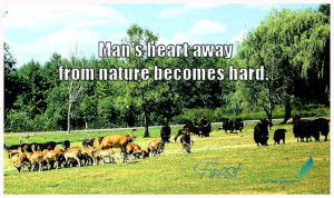 Quotes About Walking in Nature