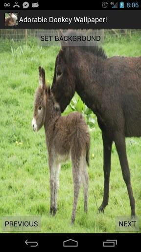Funny Mama Cute Baby Donkey