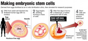 ... detailed diagram of how embryonic stem cells are created.: Stem Cell