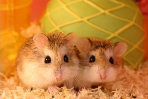 Hamsters, how cute are they?