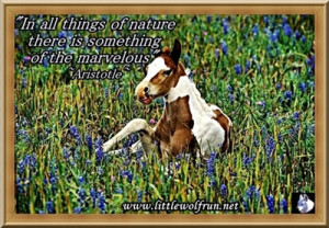 49 kb jpeg horse quotes horse poems horse sayings and quotations horse ...