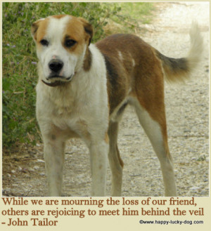 More Dog Grief Quotes