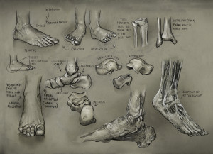 Drawing Class Human Anatomy