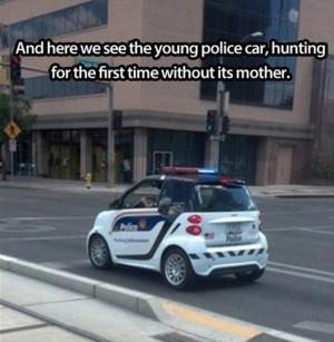 funny-police-car