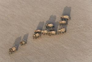 Elephant herd picture