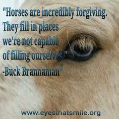... quotes horses bucks horses stuff inspiration quotes horses quotes