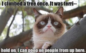 funny animals funny cats funny pictures grumpy cat humor lol grumpy
