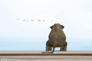 孤独的大象