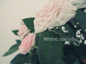flowers, funny, greek, greek quotes