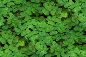 St. Patrick's Day 2014: Irish sayings, blessings toasts and quotes