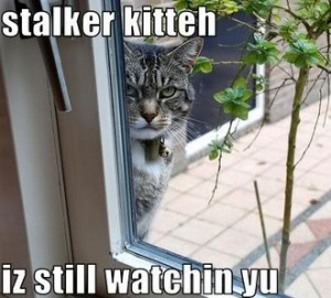 stalker quote http://www.pics22.com/pics/cat-quotes/page/3/