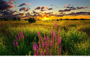 Nature___Sundown____Summer_sunset_over_the_field_071297_