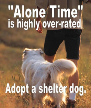 ... to love them at your local animal shelter or rescue group right now