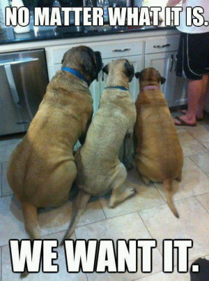 Funny dogs – We want it