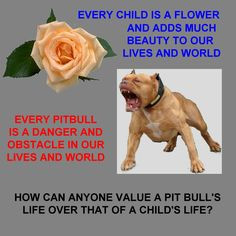 pit bull bull quotes
