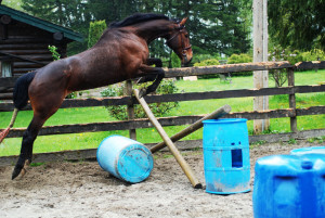 Discuss For Sale: 2004 OTTB Gelding. at the Horse Classifieds forum ...