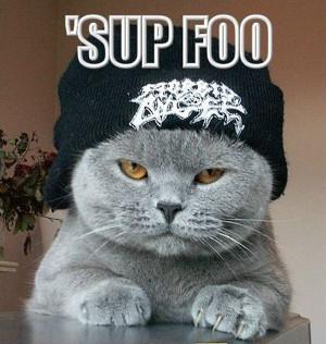 Funny stylish cat
