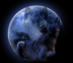 Gaze of the Moon