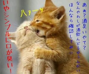 猫 おもしろ の画像をもっと見る?