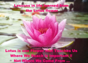 Lotus Lotus, Lotus Flower Quote And Lotus Quote