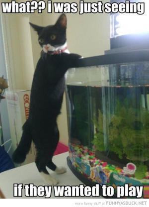 funny-looking-fish-tank-aquarium-cat-what-see-play-pics.jpg