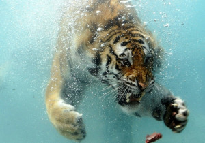 Ocean Animals Underwater