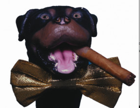 "... Poop"" On The Hilarious Puppet Pup, Triumph, The Insult Comic Dog"